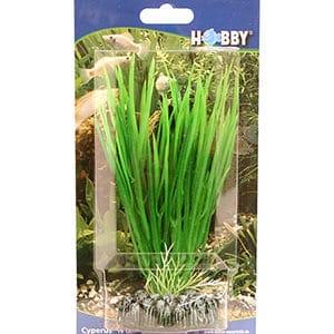 Hobby Cyperus 16 cm