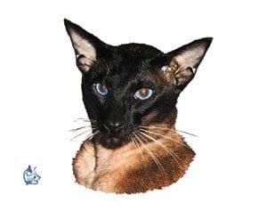 Kattdekal 14