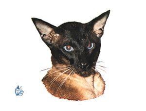 Kattdekal 15