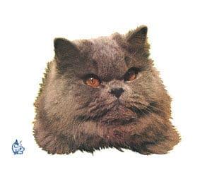 Kattdekal 8