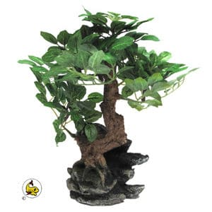 PF Bonsai sidenväxt 25