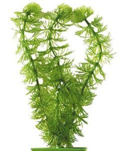 Ceratophyllum 13 cm PP-512