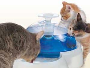 Cat-It Vattenfontän