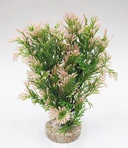 coralbushrosa