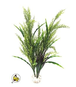 splendidgrass