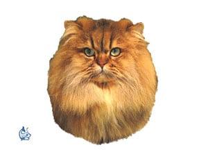 Kattdekal 16