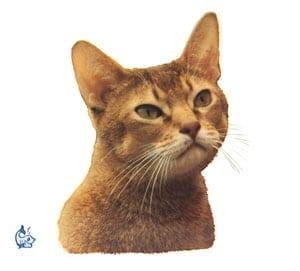 Kattdekal 2