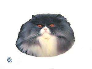 Kattdekal 7 mini
