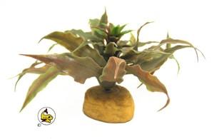 Exo-Terra Star Cactus 14 cm