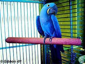 Fågeltillbehör